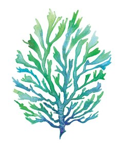 Blue Green Seaweed