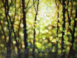 circles-of-light