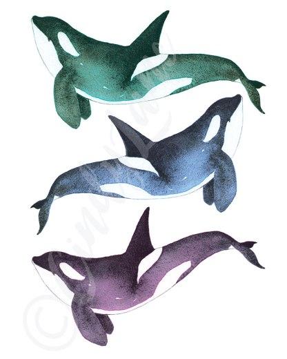 Orca Trio